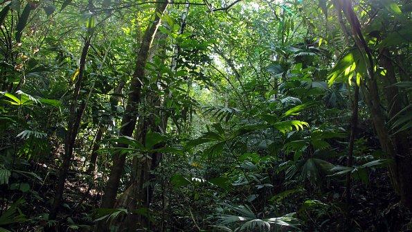 Baeume Costa Rica