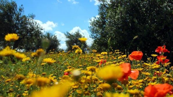 Blumen Blumenwiese