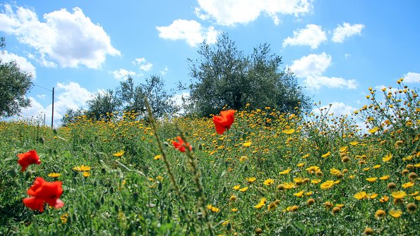 Blumenwiese Sizilien