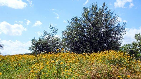 Buesche Blumenwiese