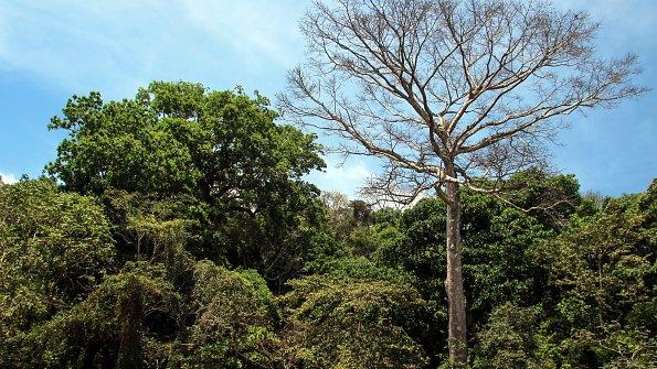 Costa Rica Baeume