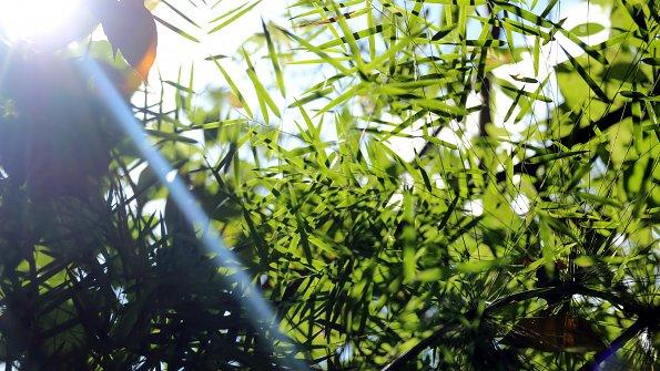 Licht Pflanzen