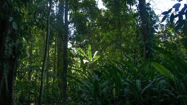 Mittelamerika Natur
