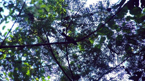 Muster Baum