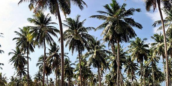 Palmen Paradies