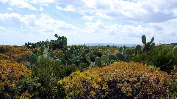Pflanzen Natur