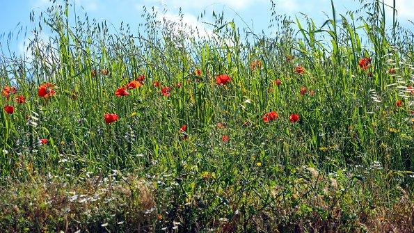 Sommerwiese Blueten