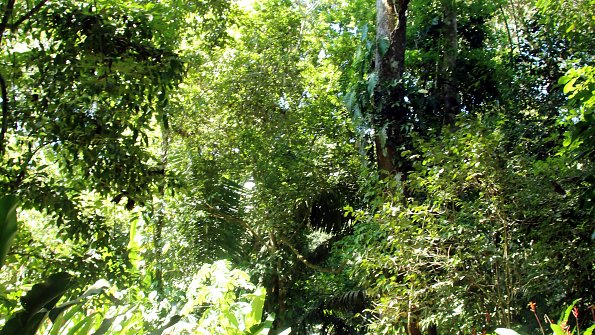 Wald Costa Rica