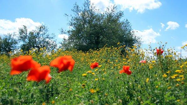 Wiese Blumen