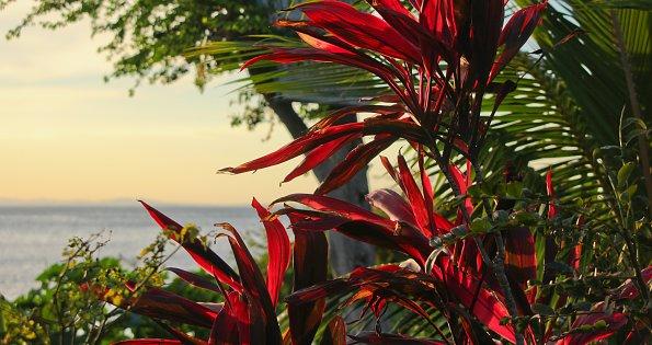 Leuchtend rote Blaetter