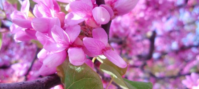 Rosa Herbst  Bilder, News, Infos aus dem Web