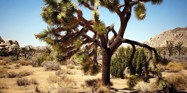 Exotischer Baum