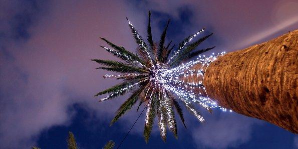 Leuchtende Palme