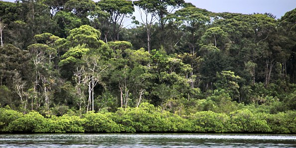 Subtropischer Regenwald