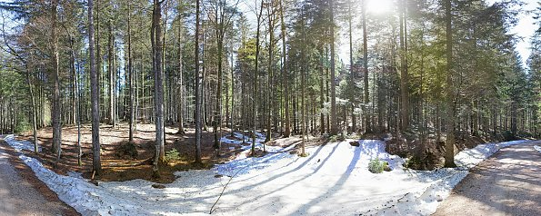 Bergwald im Fruehjahr