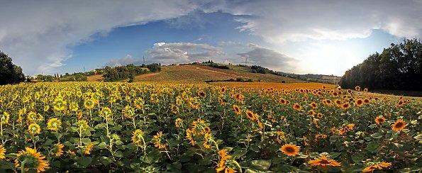 Blueten Toscana