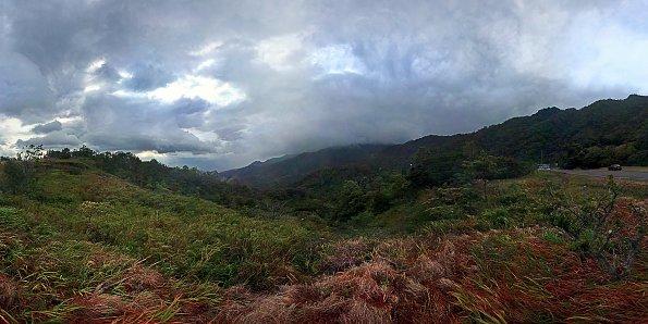 Cloud Forrest